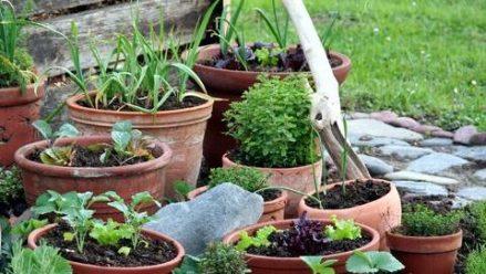 Promoting wildlife & garden design